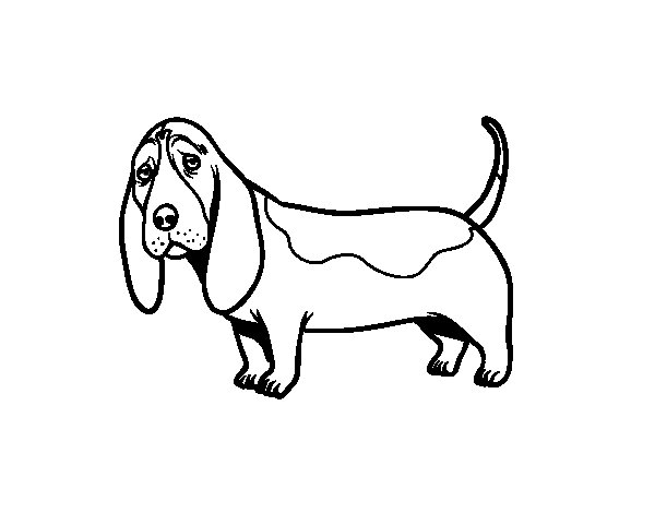 dog basset coloring pages - photo#4