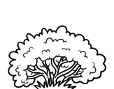 A shrub coloring page