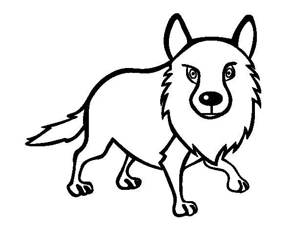 Adult coyote coloring page  Coloringcrewcom