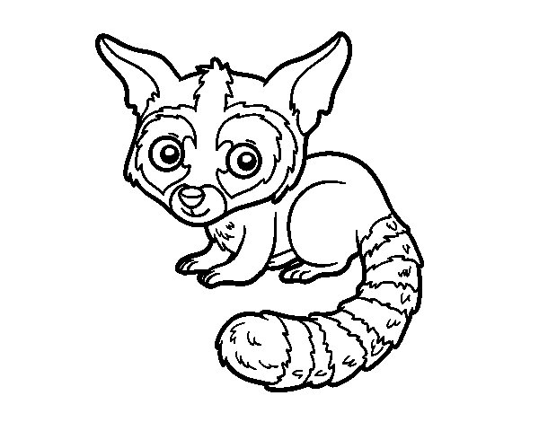 Bassariscus coloring page