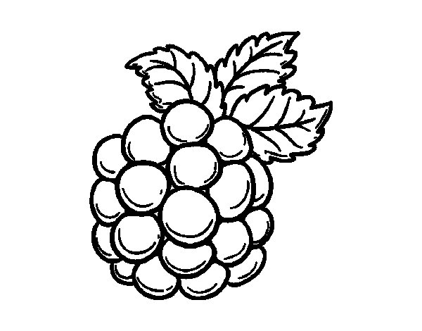 coloring pages blackberries - photo#4