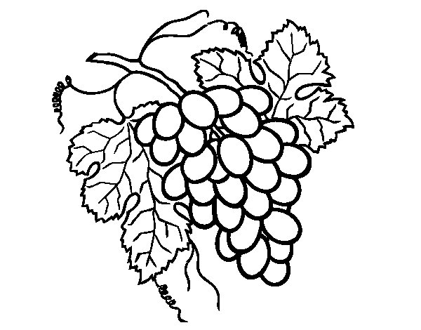 Bunch of grapes coloring page