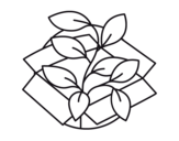 Ecological plant coloring page