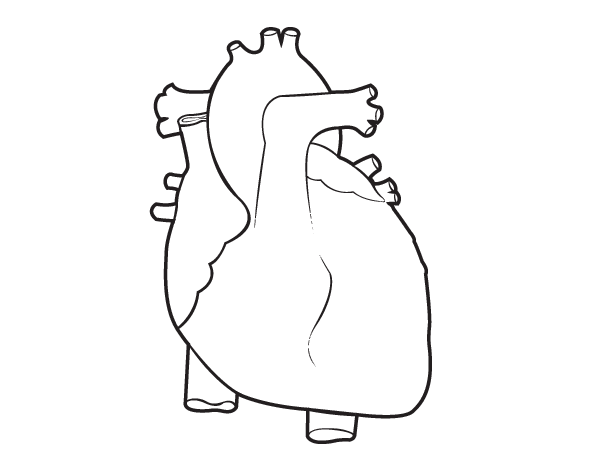 Coloring Pages Of A Human Heart  Printable Coloring Pages