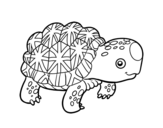 Indian star tortoise coloring page