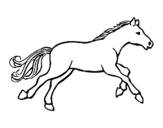 Little horse coloring page