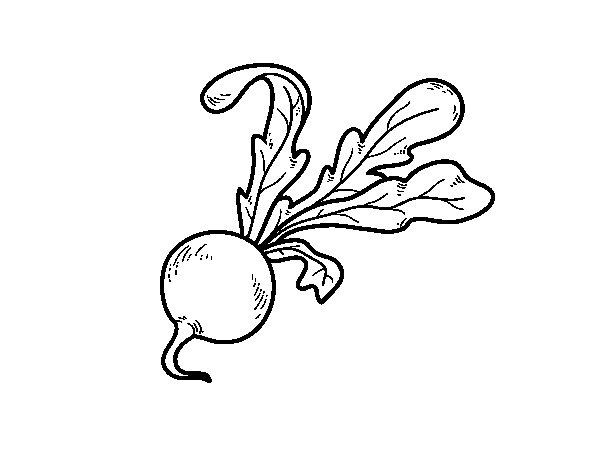 organic radish coloring page coloringcrewcom