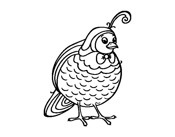Partridge coloring page