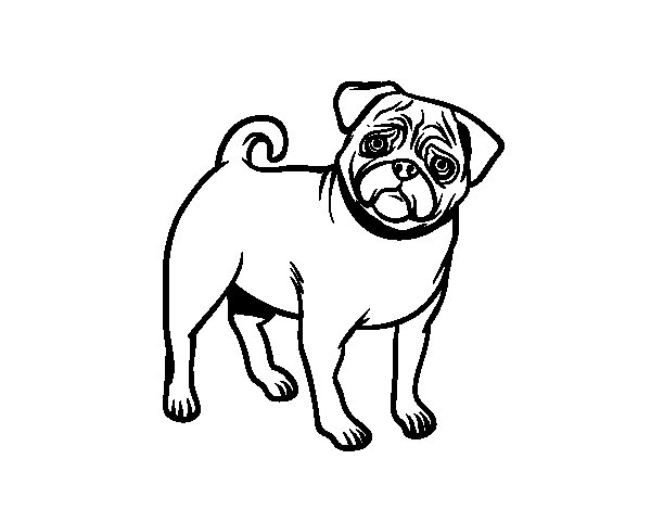 pug coloring page  Coloring Pages For Kids and All Ages