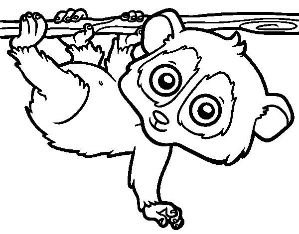 Pygmy slow loris coloring page