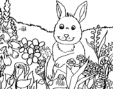 Rabbit in the country coloring page