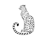 Seated Cheetah coloring page