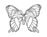 Wild butterfly coloring page