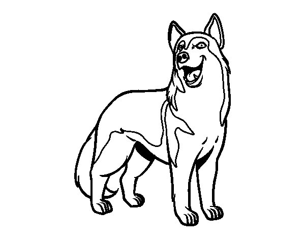 Wolfdog Coloring Page Coloringcrew Com