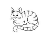 Young cat coloring page