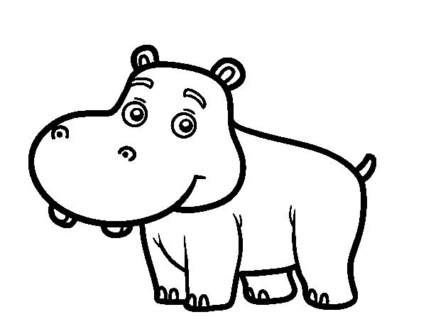 Young Hippopotamus coloring page