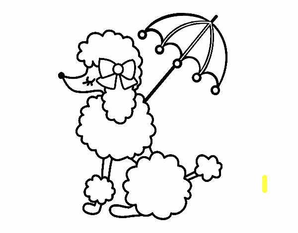 Poodle with sunshade