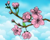 Coloring page Cherry-tree branch painted byShelbyGee