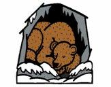 Bear hibernating