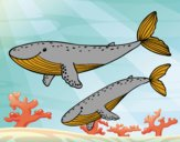 Coloring page Whales painted byponee59