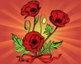 Coloring page Some poppies painted byDija