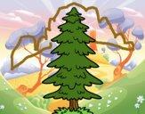 A fir
