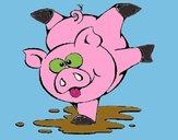 Piglet playing
