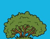 A shrub