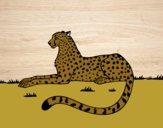 Coloring page Cheetah resting painted byjrmgirl