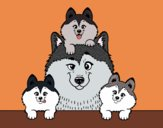Coloring page Husky family painted bypinkrose