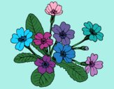 Coloring page Primula painted byMegg