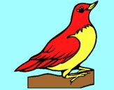Coloring page Robin painted byAnia