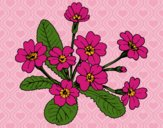 Coloring page Primula painted byCherokeeGl