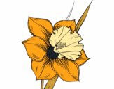 Coloring page Narcissus flower painted byKhaos