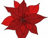 Coloring page Poinsettia flower painted byKhaos