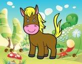 A foal