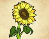 Coloring page A sunflower painted bySearlait