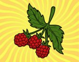 Coloring page Branch of raspberries painted bysamg