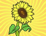 Coloring page A sunflower painted byAnia