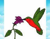 Coloring page Hummingbird and flower painted bysamg