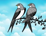 Coloring page Pair of birds painted bysamg