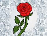 Coloring page Wild rose painted bysamg