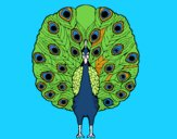 Coloring page Peacock painted bysamg