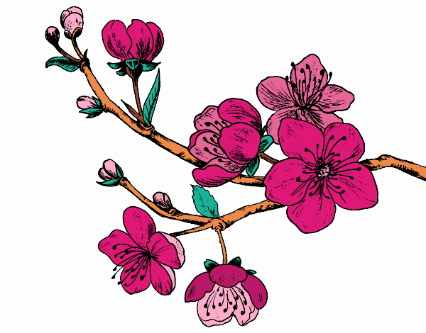 Coloring page Cherry-tree branch painted byKhaos006