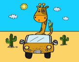Giraffe driving