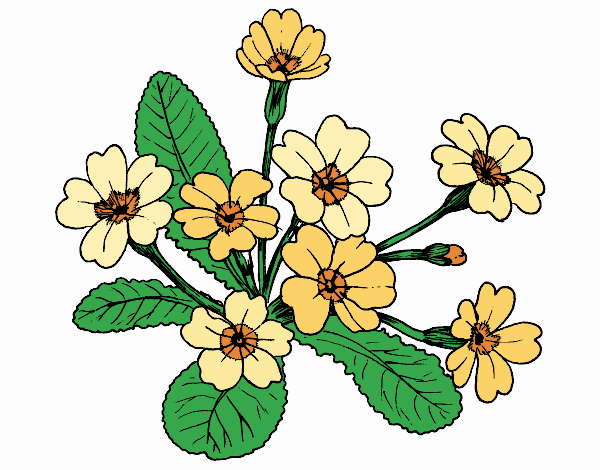 Coloring page Primula painted byKhaos006