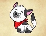 Cat with kerchief
