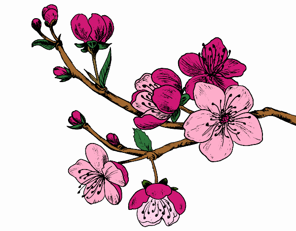 Coloring page Cherry-tree branch painted byNerak
