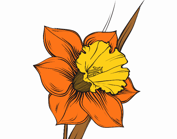 Coloring page Narcissus flower painted byNerak