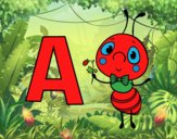 A of Ant